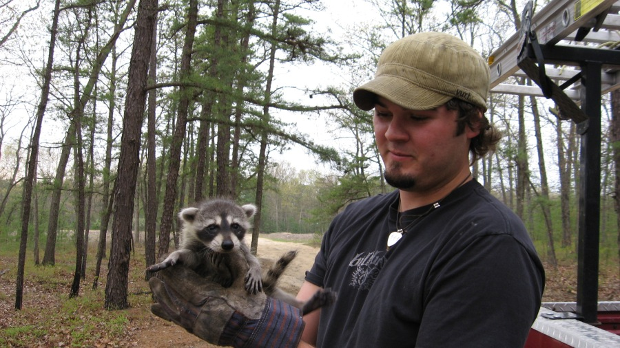 Raccoon Exclusion from attic South Jersey